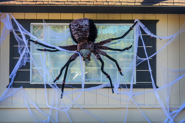 Wall Art - Photograph - Large Scary Spider  by Garry Gay