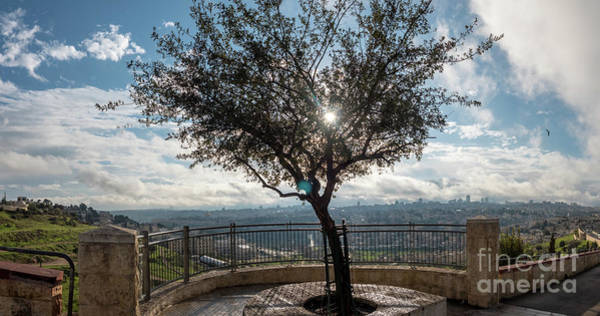 Large Tree Overlooking The City Of Jerusalem Art Print