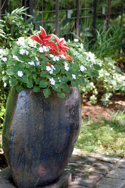 Photograph - Large Vase by Donna Bentley