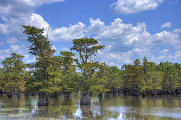 Photograph - Largemouth Country by Barry Jones