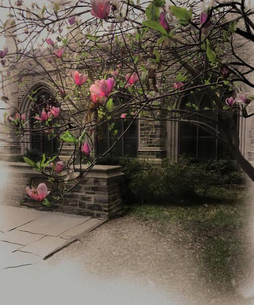 Digital Art - Larken's Colonnade by Gina Harrison