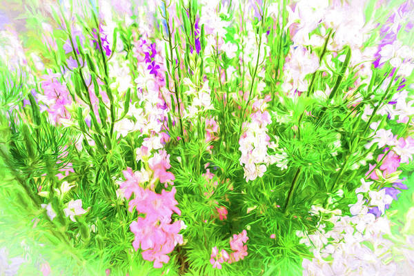 Photograph - Larkspur Flowers In Soft Oil Style by John Williams