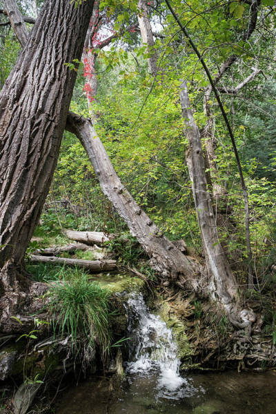 Photograph - Las Huertas Creek, Sandia Mountains New Mexico by Mary Lee Dereske