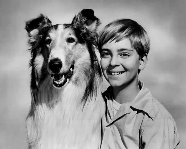 1958 Movies Photograph - Lassie And Tommy Rettig 1958 by Mountain Dreams