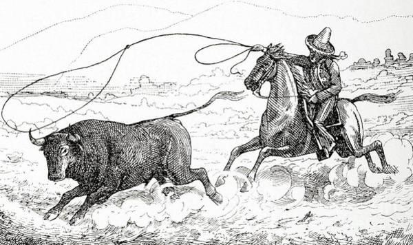 Dust Drawing - Lassoing A Bull In South America In The 19th Century by American School