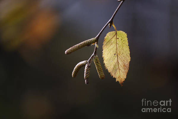 Photograph - Last Call Of Fall by Randy Bodkins