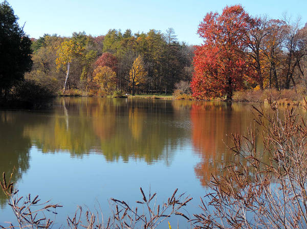 Wall Art - Photograph - Last Colors Of Fall by Teresa Schomig