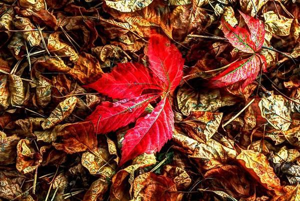Photograph - Last Leaf Of Summer by David Matthews