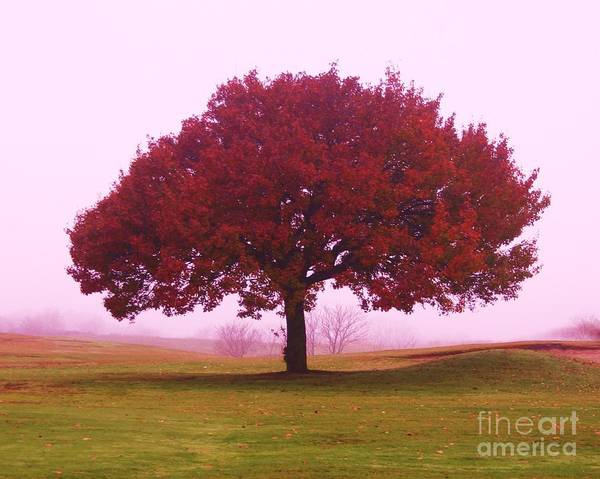 Last Leaf To Fall Art Print by Dennis Curry