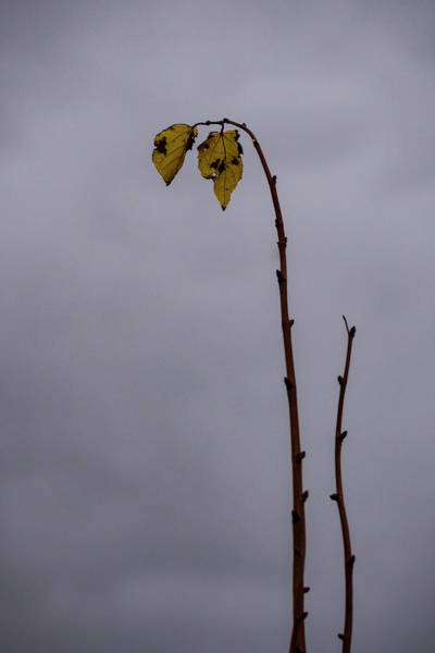 Photograph - Last Leaves by Deborah Hughes