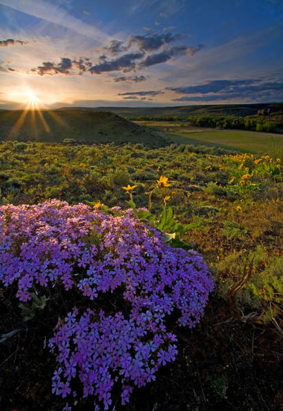 Hillside Photograph - Last Light Of Spring by Mike  Dawson