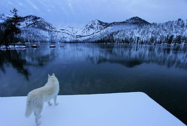 Photograph -  Last Light On Frozen Cascade Lake  by Sean Sarsfield