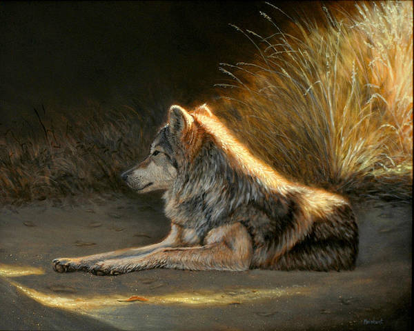 Painting - Last Light - Wolf by Linda Merchant