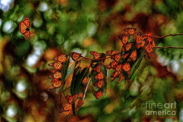 Photograph - Last One To The Monarch Grove Sanuary by Blake Richards