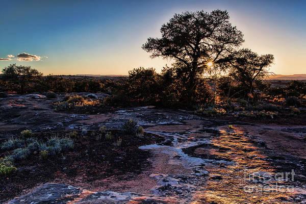 Photograph - Last Rays by Jim Garrison