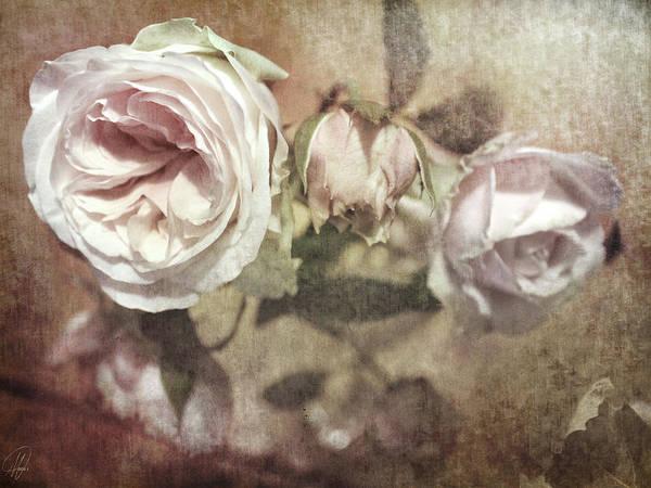 Wall Art - Digital Art - Last Rose Of Summer by Margaret Hormann Bfa