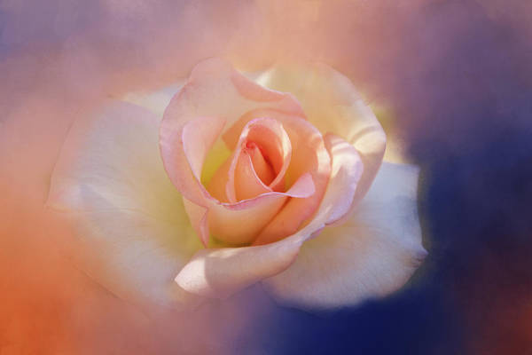 Wall Art - Digital Art - Last Rose Of Summer? by Terry Davis