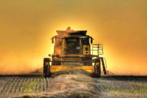 Photograph - Last Row Of Harvest by David Matthews