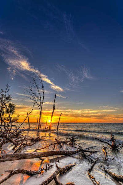 Bradenton Wall Art - Photograph - Last Stand by Marvin Spates
