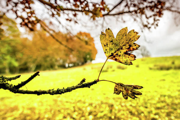 Photograph - Last To Fall by Nick Bywater
