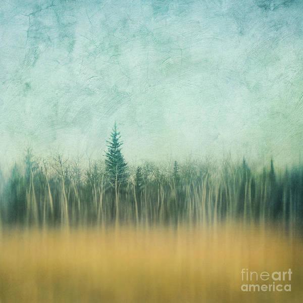 Treeline Photograph - Last Year's Grass by Priska Wettstein