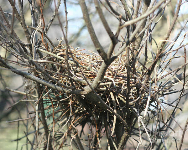 Empty Nest Wall Art - Photograph - Last Year's Home by Smilin Eyes  Treasures
