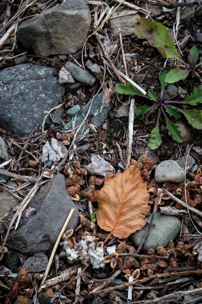 Photograph - Last Year's Leaf by Mary Lee Dereske