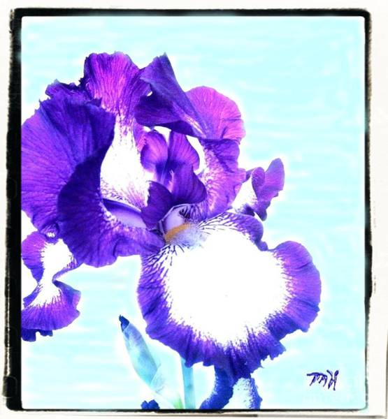 Purple Iris Mixed Media - Last Years Wavy Iris by Marsha Heiken