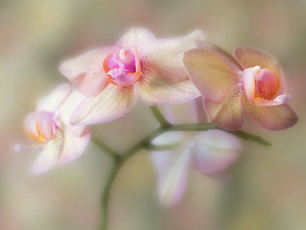 Photograph - Lasting Forever. by Usha Peddamatham
