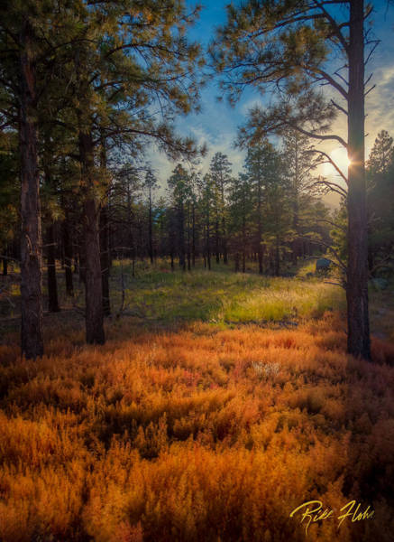 Photograph - Late Afternoon At Lockett Meadow by Rikk Flohr