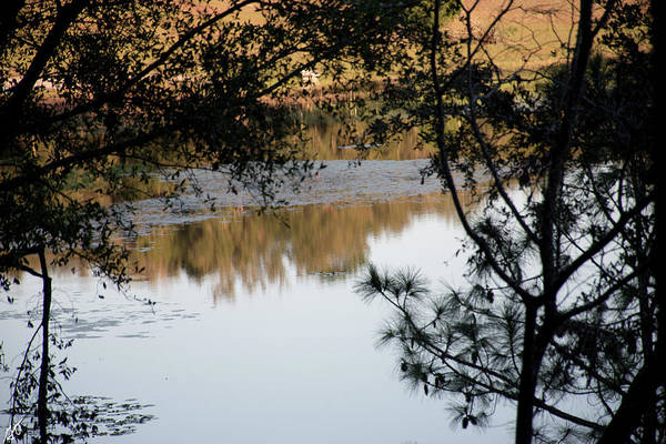 Photograph - Late Afternoon Lake Beauty by Gina O'Brien