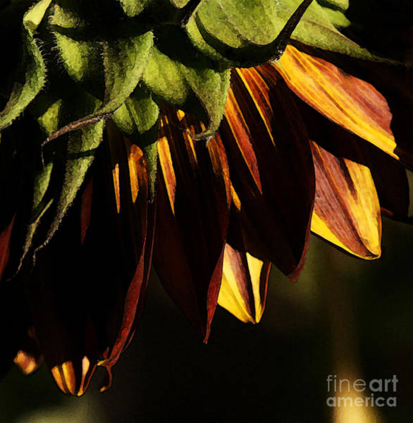 Photograph - Late Afternoon by Linda Shafer