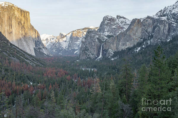 Photograph - Late Afternoon Sun On Yosemite Valley by Richard Sandford