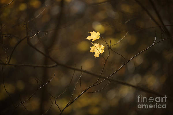 Connecticut Photograph - Late Autumn Light by Diane Diederich