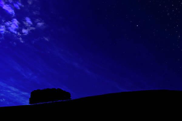 Hillside Photograph - Late Evening Copse by Meirion Matthias