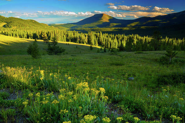 Photograph - Late Evening Light Along Boreas Pass by John De Bord