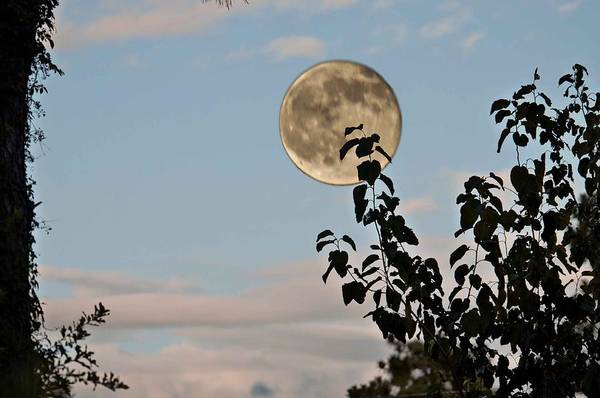 Wall Art - Photograph - Late Evening Moon by Bill Perry