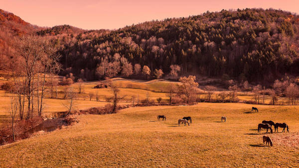 Photograph - Late Fall Grazing by Brenda Jacobs