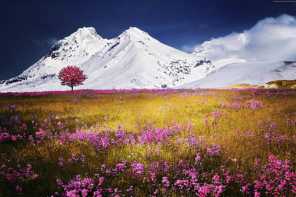 Photograph - Late Spring In The Alps by Movie Poster Prints