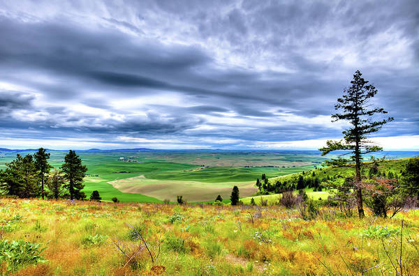 Photograph - Late Spring On Kamiak Butte by David Patterson