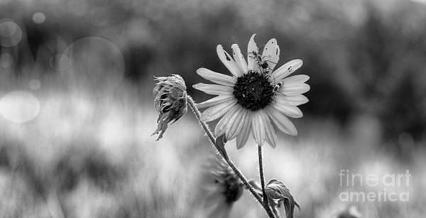 Photograph - Late Summer Crawl by Susan Warren