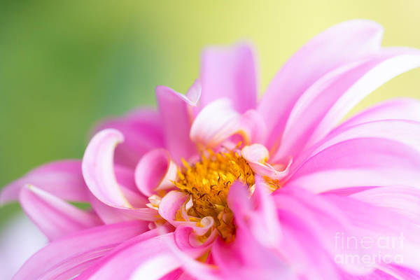 Photograph - Late Summer Passion by Beve Brown-Clark Photography