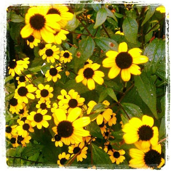 Photograph - Late Summer by Tammy Winand