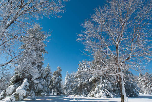 Photograph - Late Winter Colorado Beauty by Cascade Colors