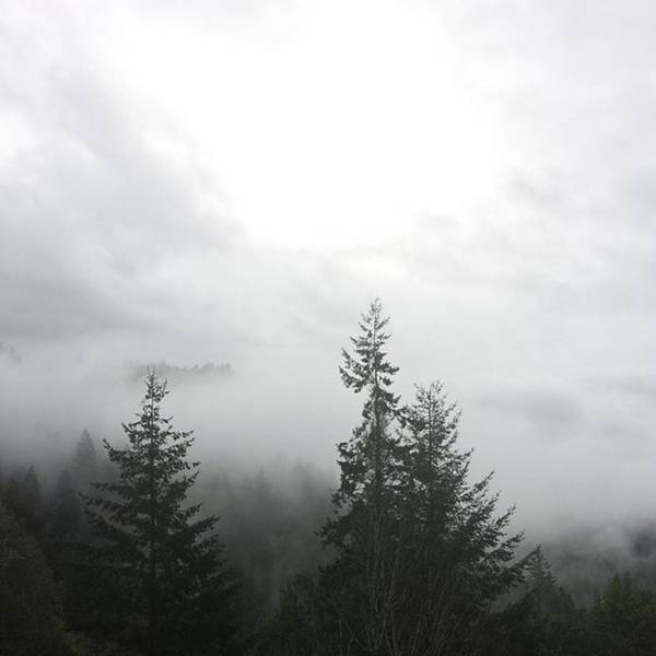 Photograph - #latergram #fog #trees #wmpnature by Tricia Elliott