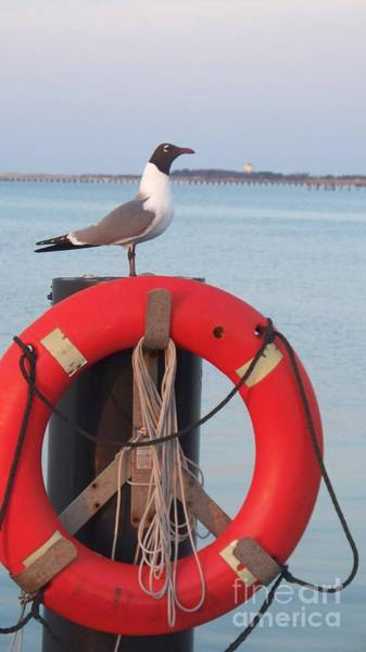 Wall Art - Photograph - Laughing Gull At Lewes by Eric  Schiabor