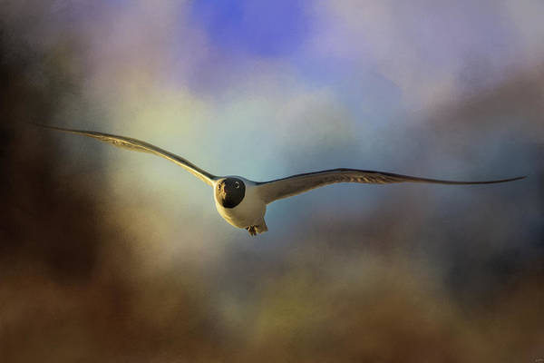 Photograph - Laughing Gull At Sunset by Jai Johnson
