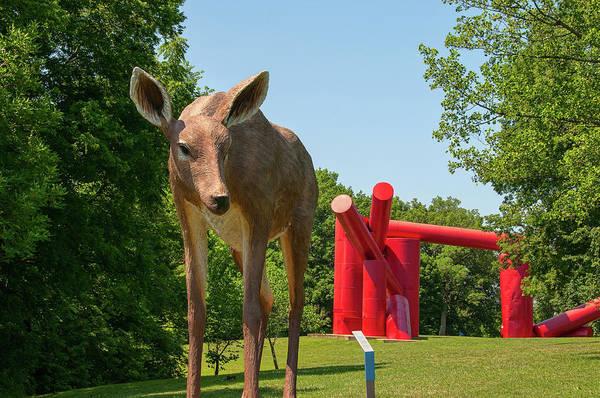 Photograph - Laumeier Park by Steve Stuller