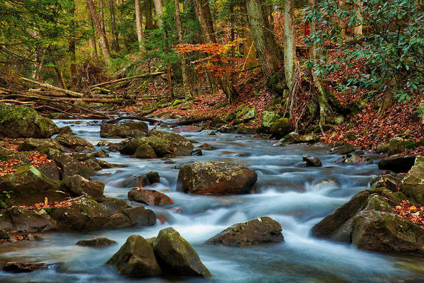 Photograph - Laurel Fork In The Fall by Andy Crawford