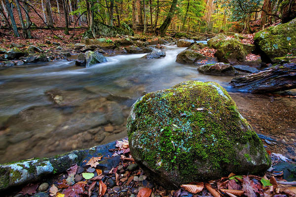 Photograph - Laurel Fork Rapids by Andy Crawford